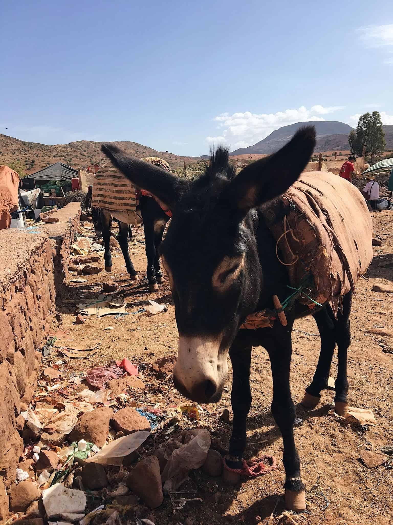 Rejseguide til Marrakech i Marokko