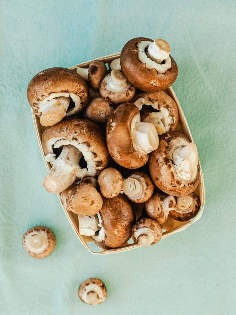 svampe til nøddepostej