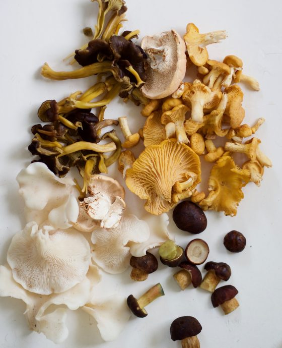 Svampeguide: spiselige svampe!